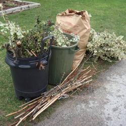 Yard Waste (JPEG)